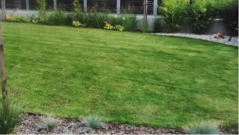 1. Trávník po vertikutaci dosevu  a  hnojení  (půlroční údržba)